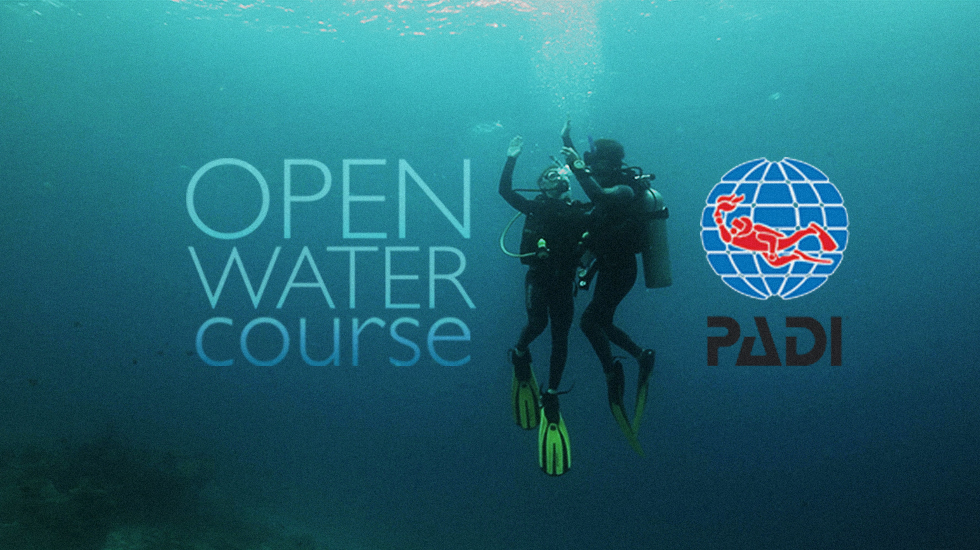 Image result for padi open water